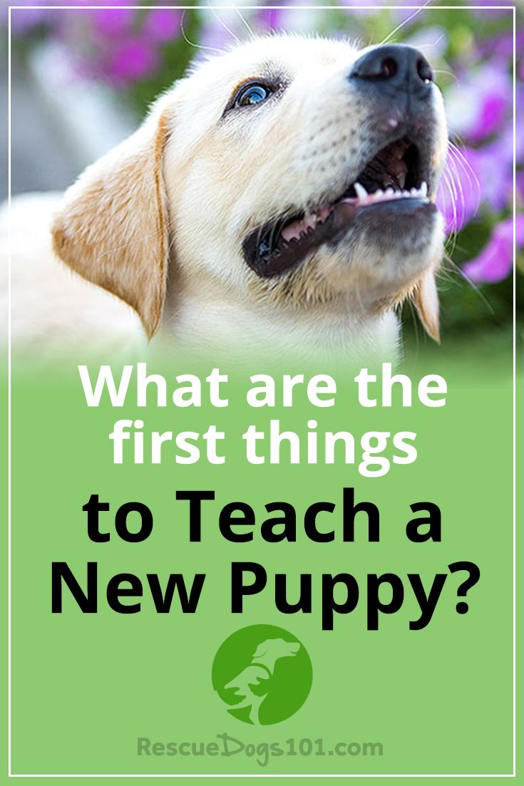 What S The First Things You Should Train Your Dog