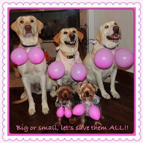 Even canines are on board to save the tatas....Big or small, lets save em all