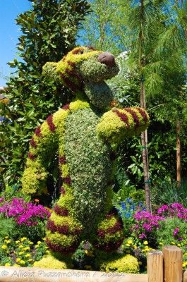 Alicia talks about the Epcot International Flower  Garden Festival