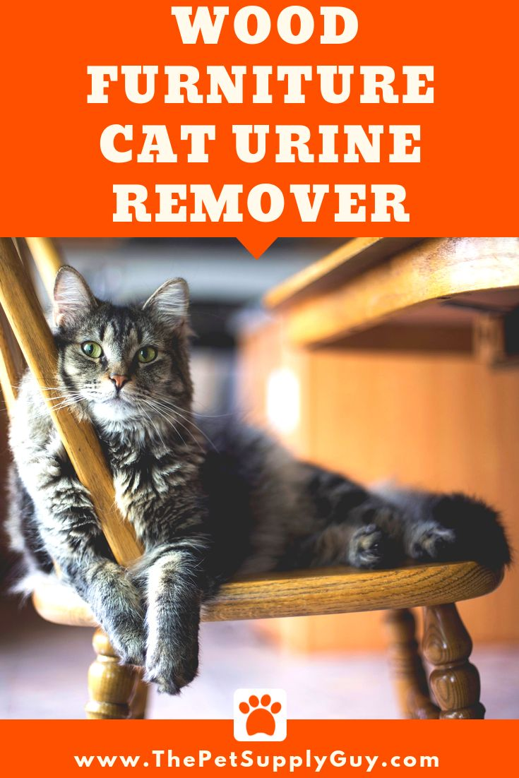 How to get cat urine out of wood furniture cat urine