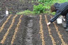 Весна в огороде. Краткие инструкции по сезонным работам