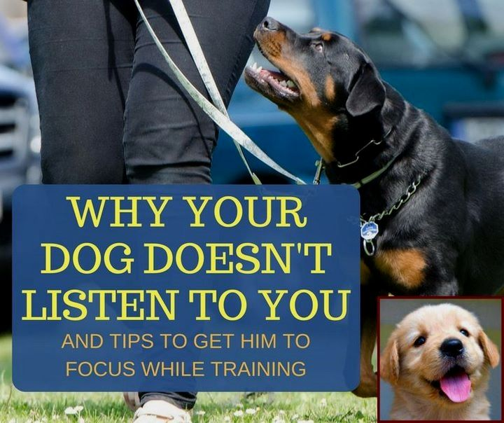 Dog Behavior Timeline And How Much Do Dog Behaviorists Cost Dog