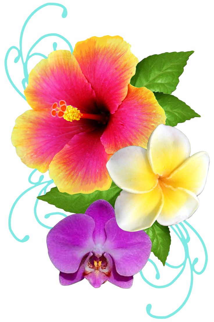 tattoo concept that i came up with. i want it to be as brightly colored as possible! hibiscus=anthony, plumeria=carter, orchid=tanner