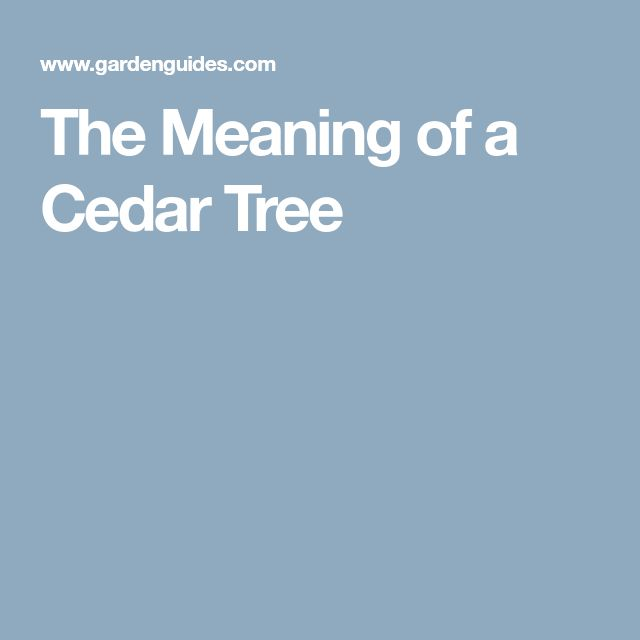 The Meaning of a Cedar Tree