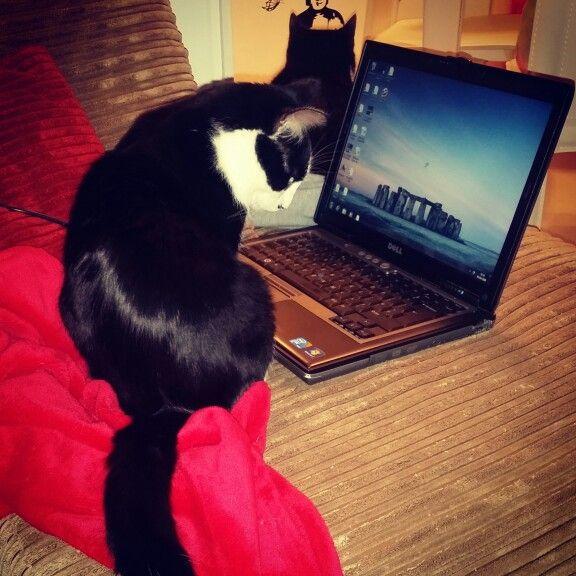 Hacker kittie