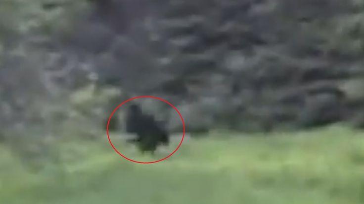 The Alexo Bigfoot Encounters | The Fortean Slip