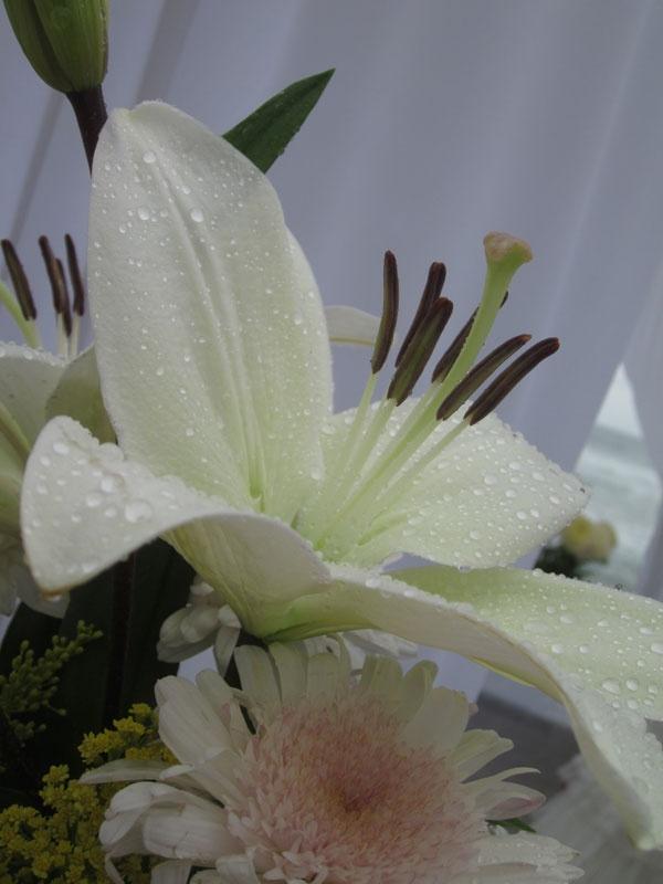 Wedding Flowers- Photos by Tina Winterlik © 2012
