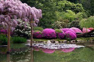 Seattle Arboretum.