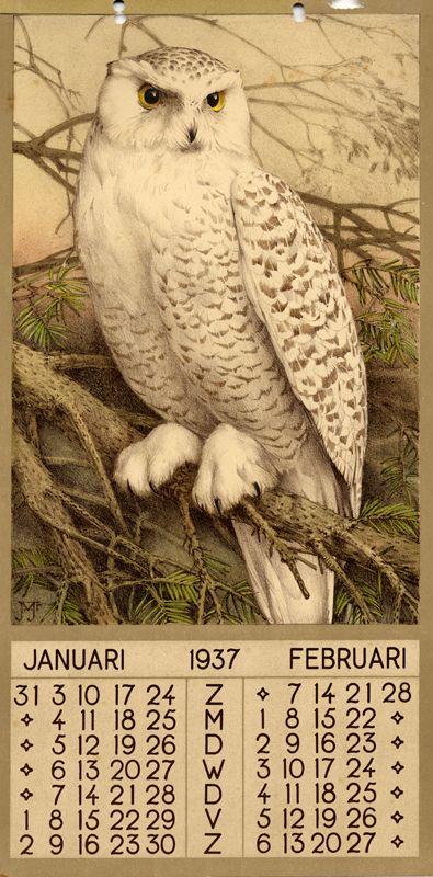 ¤ 1937 - January February. Owl illustration. 1 calendar, 6 leaves : col. ill. ; 39 x 20 cm. Créateur:Jan Voerman Jr. (DUTCH, 1890-1976)