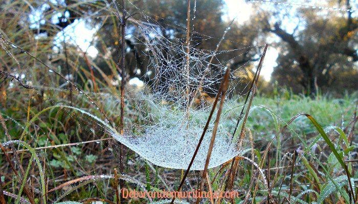 The  Intricacy Of A Cobweb