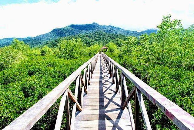 Hutan Mangrove Pancer Cengkrong