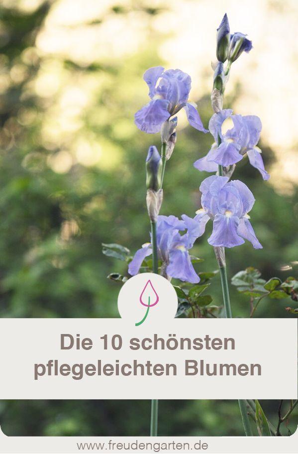 10 Pflegeleichte Blumen Die Keine Arbeit Machen Grune Kumpels Blumen Fur Garten Bienenfreundlicher Garten Und Pflegeleichter Garten