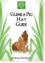 The Most Important Things to Know about the guinea pig diet - Small Pet Select