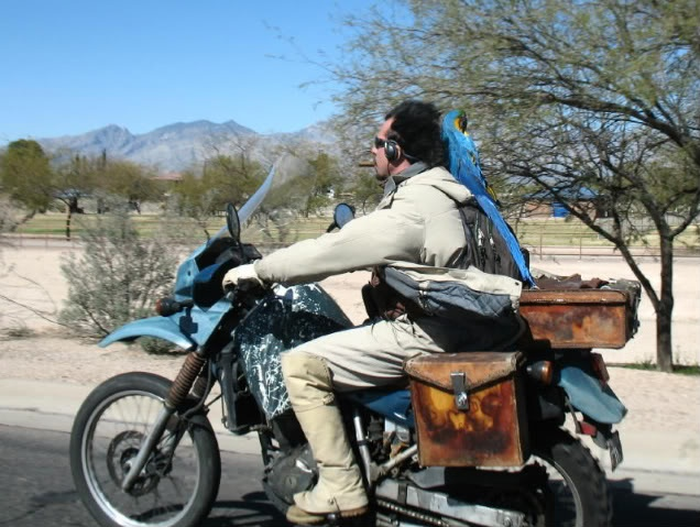 Man Riding Motorcycle With Blue And Gold Macaw Parrot On His Right Shoulder