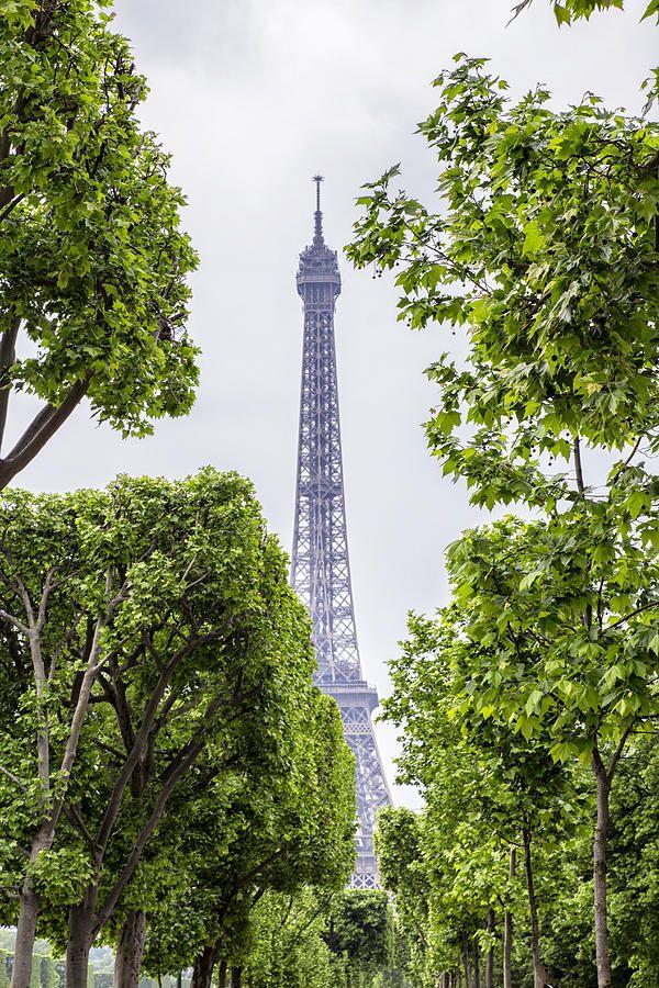 Eiffel Tower And Springtime Trees Photograph by Georgia Fowler #walldecoration #walldecorideas #WallDécor