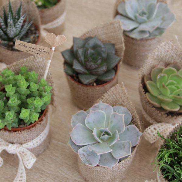 Minik bitki, düğün hediyesi   Lovely Colors - özel tasarım düğün davetiyeleri