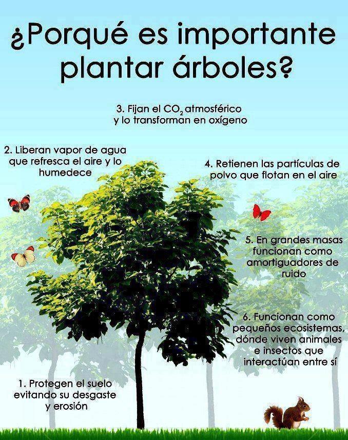 EL MEDIO AMBIENTE Y SUS SOSPECHOSOS ACOMPAÑANTES - ¿Por qué es importante plantar árboles?