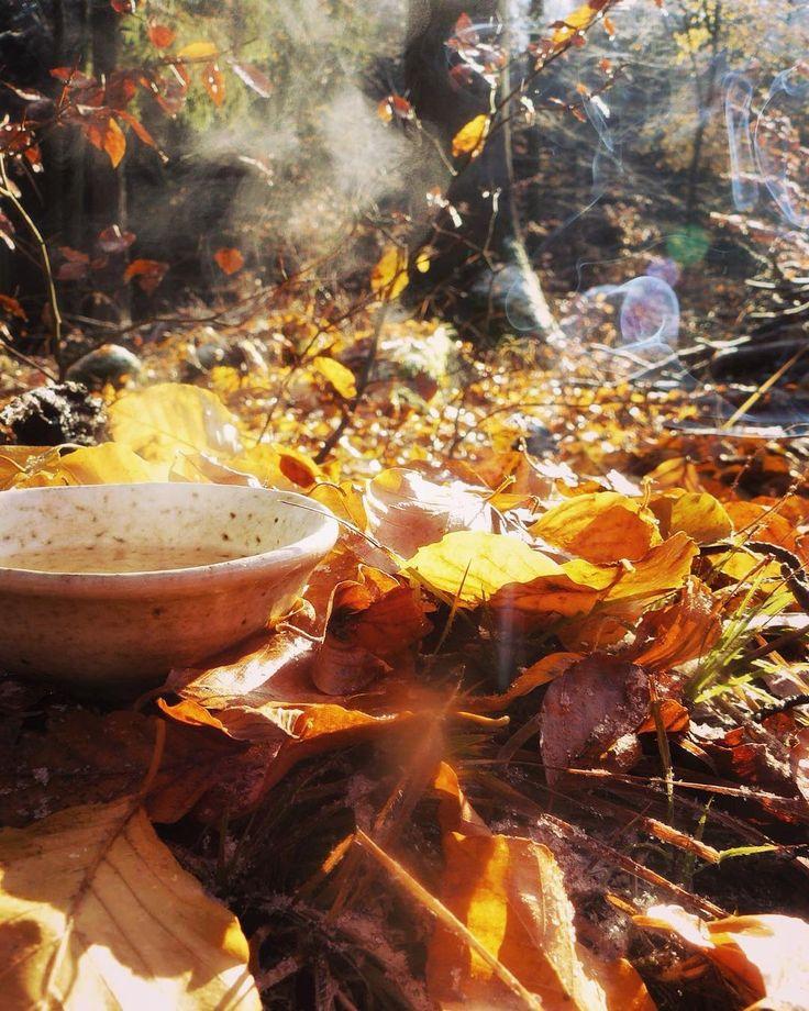 """#teatime #teaadict #tealovers #tamaryokucha #naturelovers #withfriend #totemoviste #forest Honzík zapálil tyčinku stromu a četl pěkné básně u """"totemoviště""""hřbitovu stromů!🍃🌿❄️☕️#klubkocajuje"""