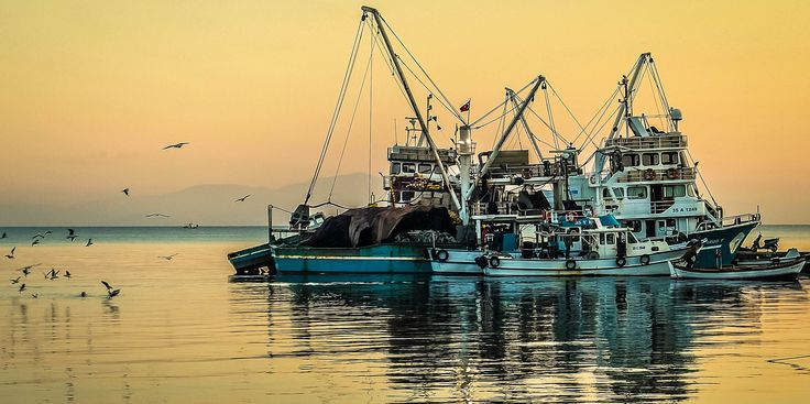 The fishing boats of Altinkum, Turkey