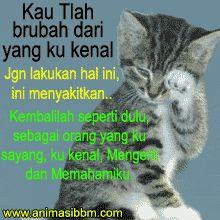 Dp Bbm Kata Kata Sedih dan Kucing Menangis Terupdate