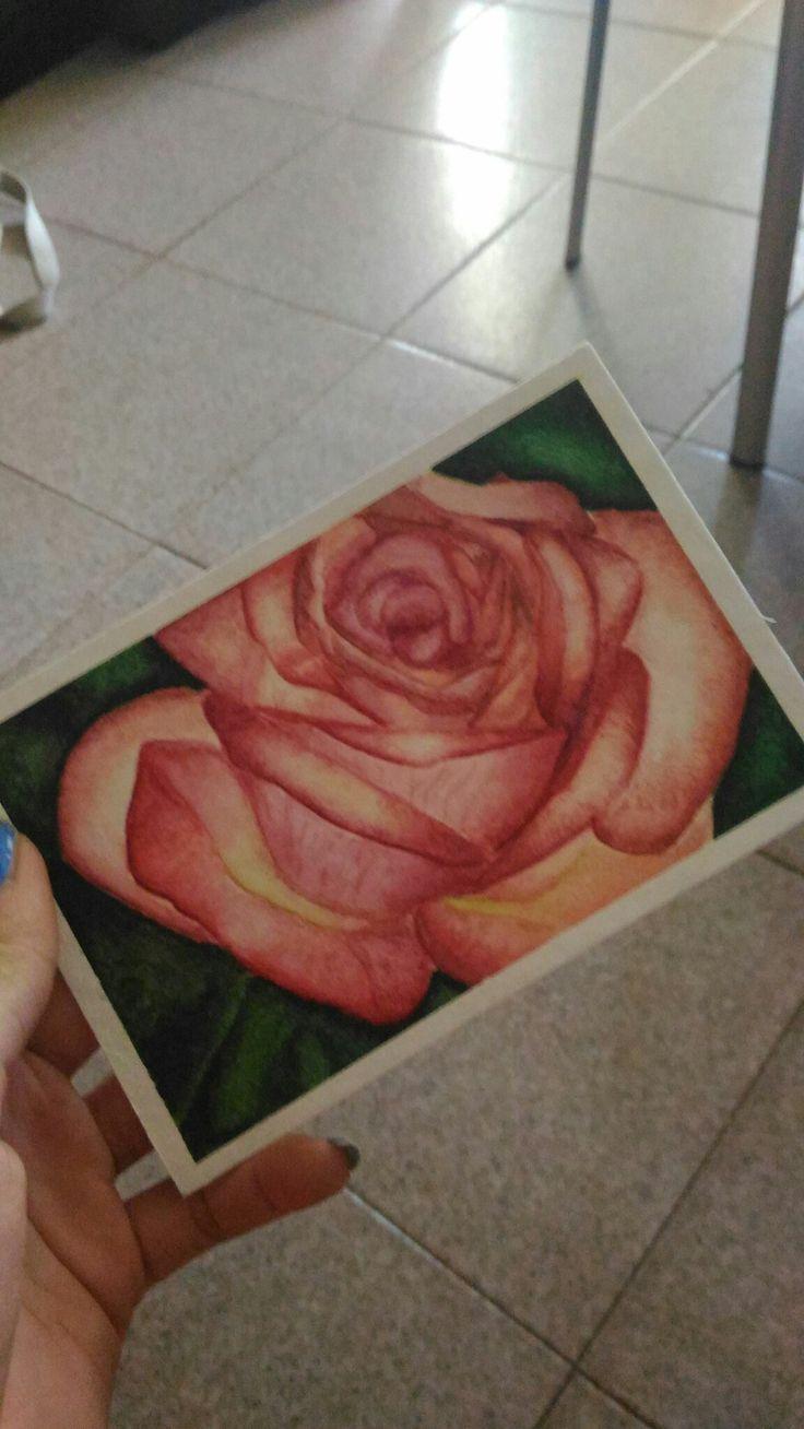 Rose #watercolors#4hours#workhard#rose