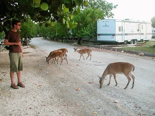 What happened to the tiny Key deer during Hurricane Irma? | Miami Herald