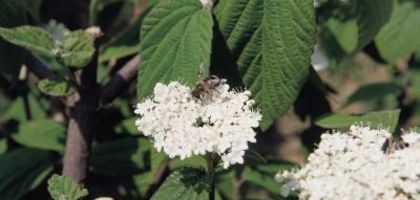 Natural Bee Repellent for Outdoors | eHow