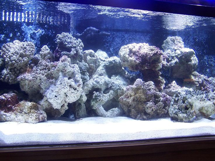 reef aquascaping designs | Gallon Bonsai Aquascaping ...