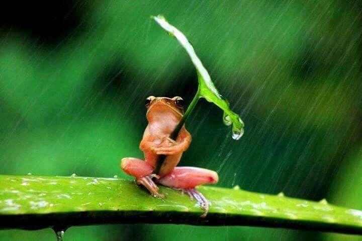 Raun rain go away..