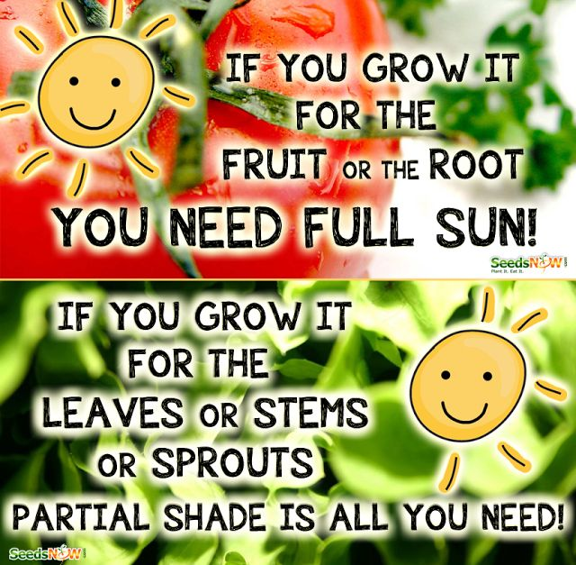 Alternative Gardning: What grows in shade, and what grows in full sun