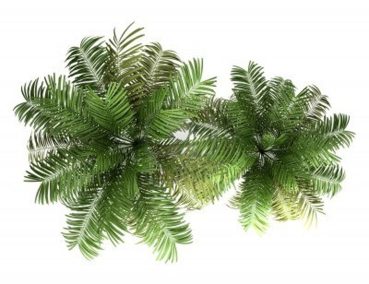www-123rf-com_areca-palm-trees.jpg (1200×924)