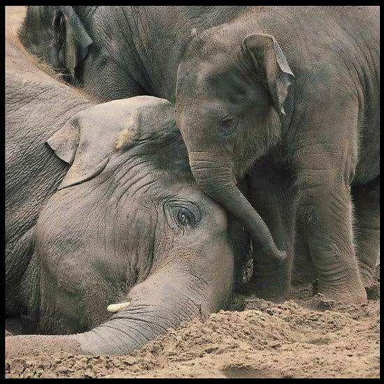 viel liebe www.inneresgold.de #elefant #elefant #elefantenbaby #liebe #lie …   – Amazing Elephants