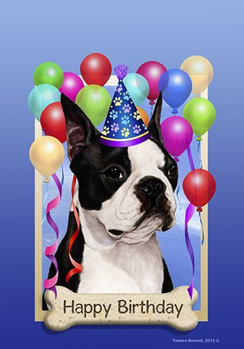 boston terrier birthday - Google Search