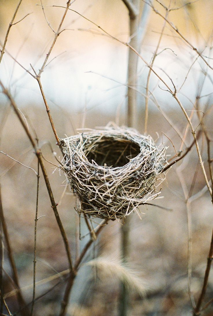#birdsnest. A tender image that always captivates me. I love their fragility yet sturdiness made with just a tiny #beak and #grass.