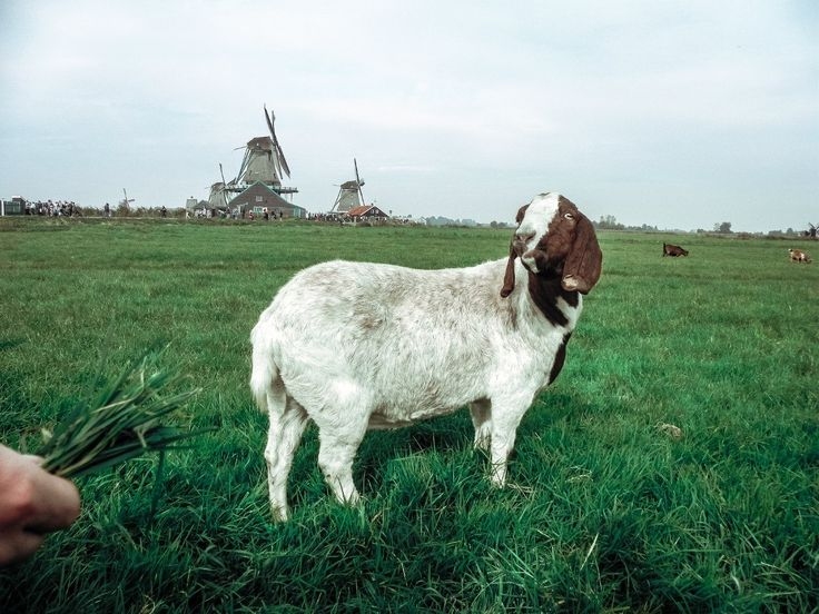 Zaandam Nederland