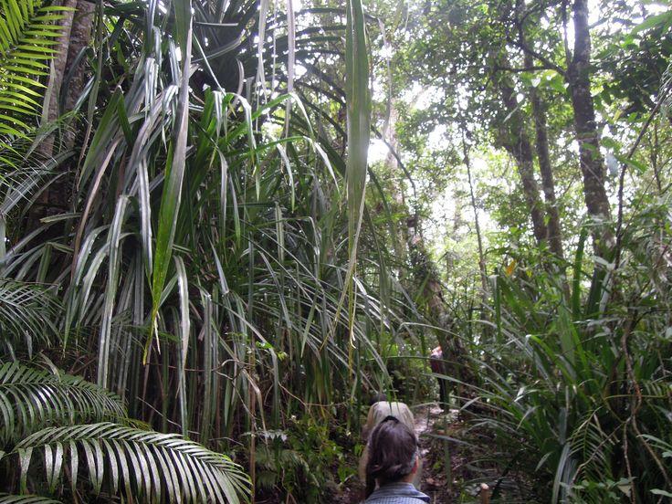Gunung (Mountain) Rinjani – 4 days of luxury trekking in Indonesia | Traveling Spuds