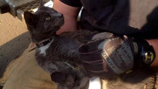 Tux the cat survives Fort McMurray, Alberta, Canada wildfire by hiding in the stove oven. #Animals #Cat #Fire #Healing #Inspiring #Love #Luck #Motivational #Nature #Pets #Survive #Therapeutic, #Video #Wildfire |