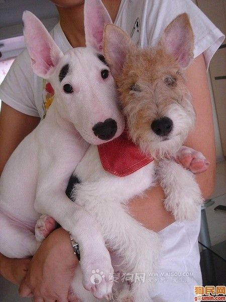 This is what I want!!!! Both of them...my heart be still...I already have the wire I just need the bullie!!!