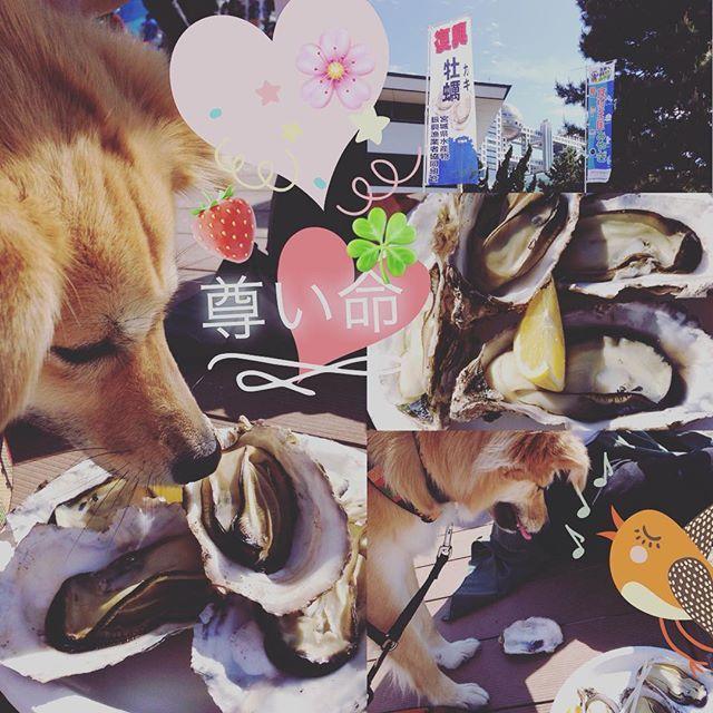 🌸大切な命🌸ペットショップで可愛いから💕と買った一匹がどれだけたくさんの犬猫🐶🐱を苦しめ殺す事になるのか🐕🐈全ての日本人は知らなければいけない🤔まだ日本は殺処分し続けて、当たり前にペットショップで生体販売がされて可愛い💕・・・。と喜んで買う人がいる🙊🙈👁🤔時代遅れな日本人🍂繁殖犬や殺処分と検索して見て下さい👁🤔👁生体販売しているペットショップに冷たい態度を👁🤔ひとりひとりの正しい選択と高い意識で未来は変わる🌈👭🌈知って広める動物愛護🌸👭🌸私は保護犬、保護猫飼うよ🍀👭🍀あなたを待っているたくさんの命があります🐈里親会や譲渡会に足を運んで見ませんか🌍🕊👫👨👩👧👦🕊🌍私達が出来る事 #dog#ミックス#犬#里親#愛犬#保護犬#カメラ部#雑種#かわいい#写真#牡蠣#家族#江戸川区#子犬#花#動物#景色#海#寝顔#空#つくし#桜#いちご#風景#ペット#straydog#クローバー#元野犬#わんこ#幸せ