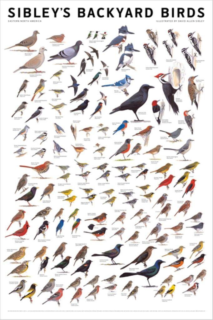 Printable Bird Identification Chart | February 16, 2012