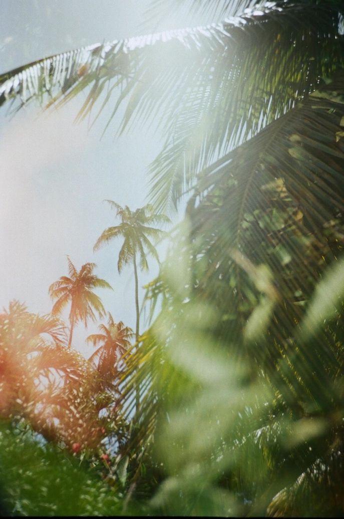 palms | sunshine
