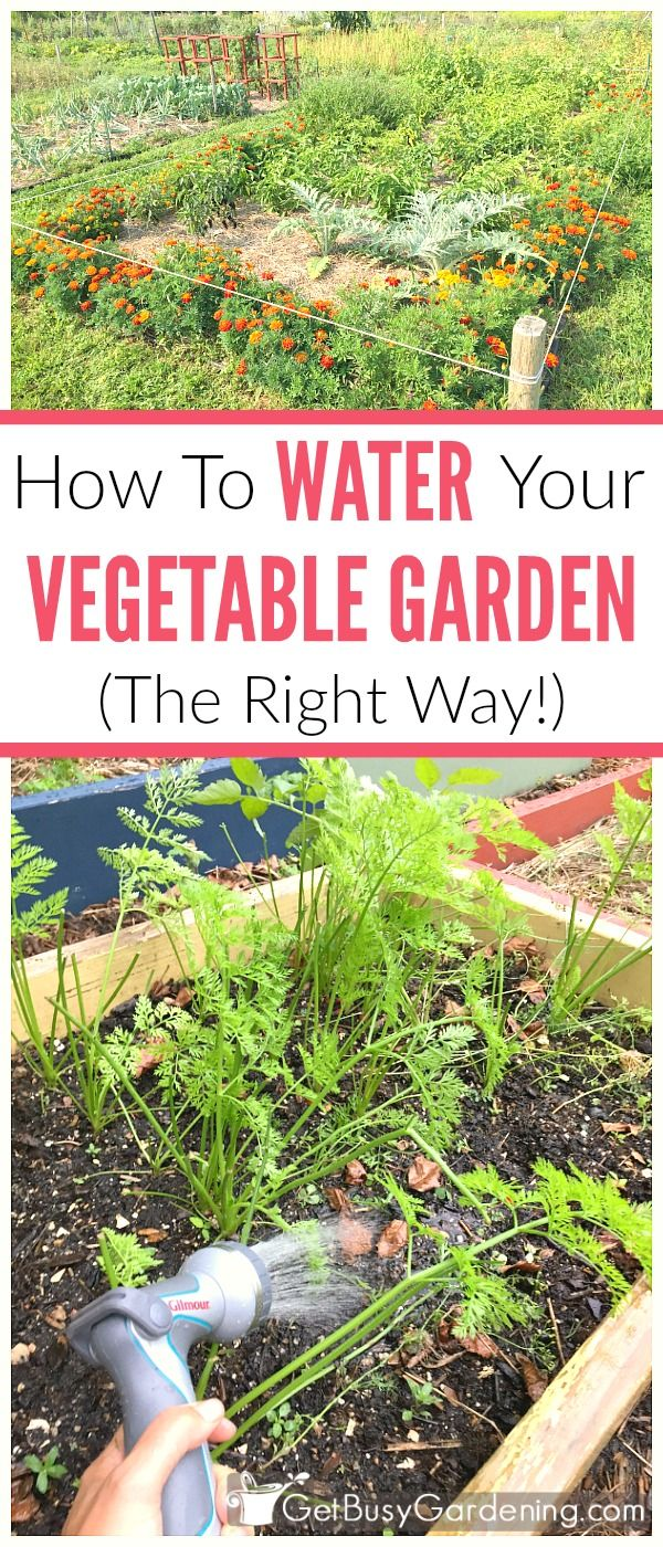 If your vegetable garden isn't producing as much food as you would like, it might be a sign that you're not watering it correctly. Vegetable garden irrigation is one of the most crucial aspects of successfully growing food, and it can make or break your growing season. (AD)