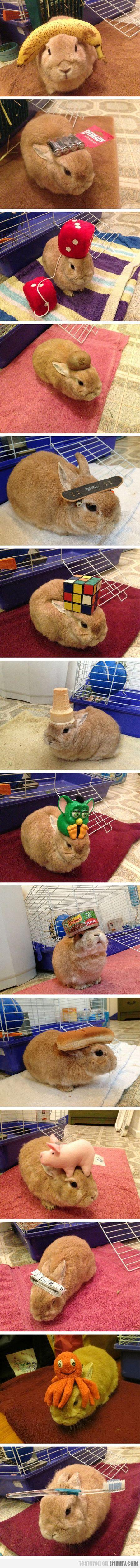 Different Stuff On My Rabbit