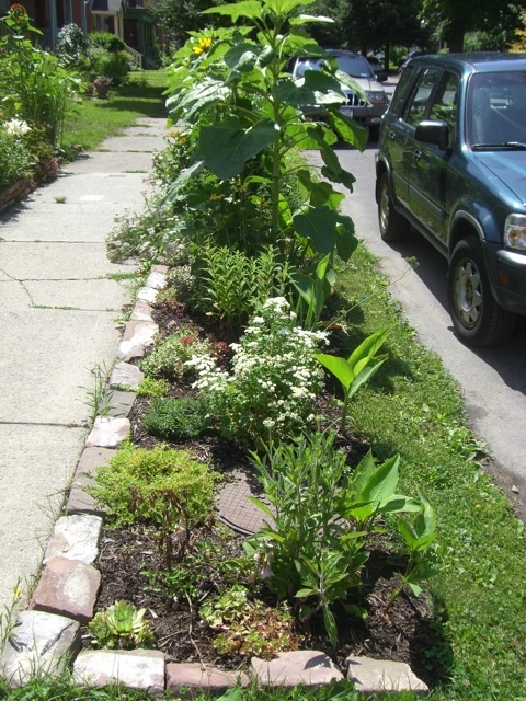 67 best images about sidewalk strip plantings on pinterest for Landscaping rocks buffalo ny