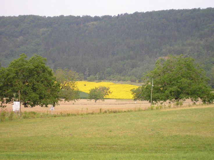 Veld vol zonnenbloemen - Saint Léon s/V - juli 2006