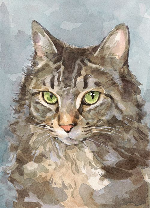 """Mainecoon Cat Watercolor"" by David Scheirer"