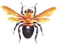 carpenter bee info--includes how to repel them
