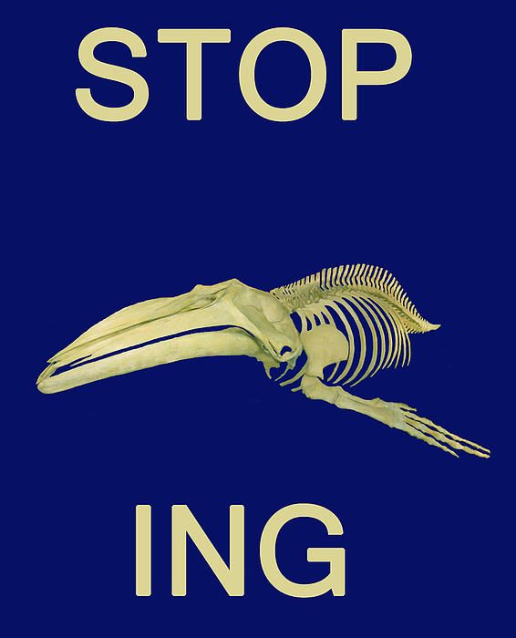 STOP Whaling