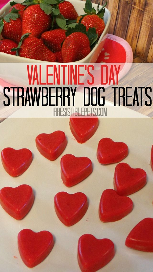 What's better to give your dog on Valentine's Day than a treat you can both enjoy? Chuy and I are going to show you how to make a Frozen Strawberry Smoothie Dog Treat using just two ingredients. We love smoothies around here because they are all natural,...