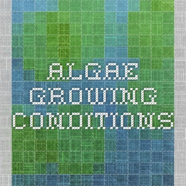 What causes algal blooms?